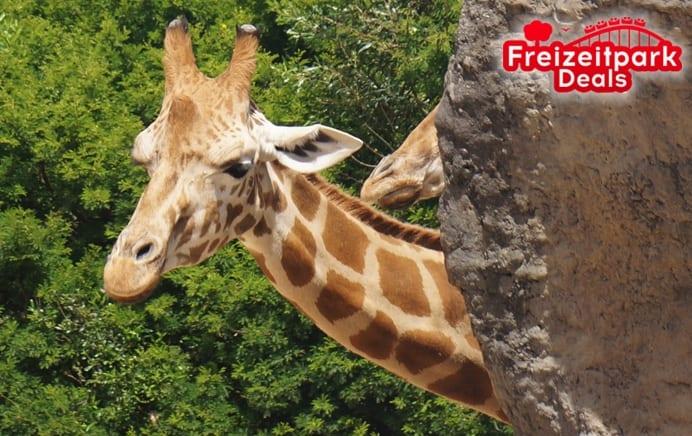 Zoo Safaripark Stukenbrock Ticket Fur 16 90 Statt 32 50 Freizeitparkdeals