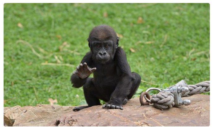Jahreskarte Zoo Krefeld